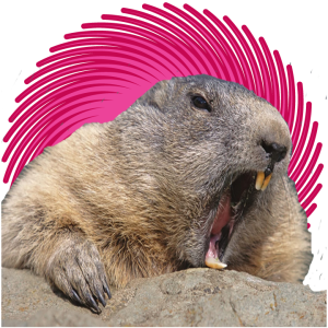 No Beaver Shots